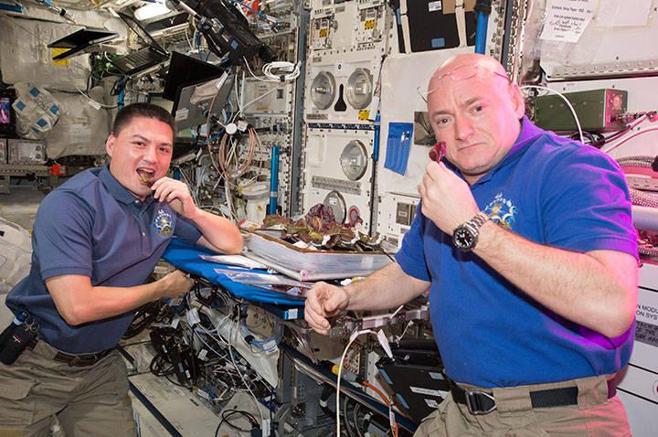 NASA astronauts Scott Kelly and Kjell Lindgren take a bite of plants harvested for the VEG-01 investigation. Credits: NASA